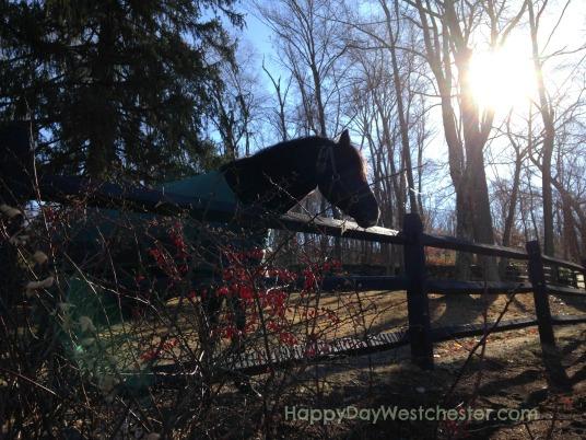 Horse at Fox Hill Farm