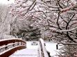 Happy Day Westchester Snow Day Park Watermark dark