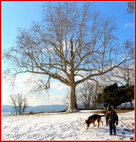 happy day westchester rockwood hall tree and dog 2