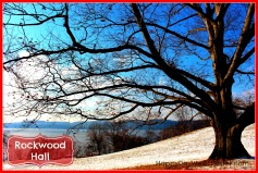 Happy Day Westchester Rockwood Hall Tree featured
