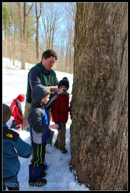 Happy Day Westchester ward pound ridge tree tapping