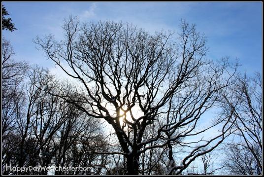 wordless wednesday tree