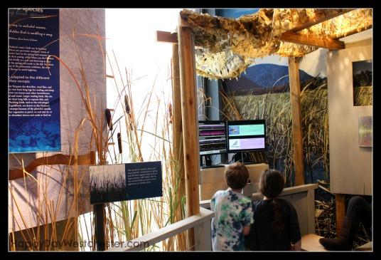 Happy Day Westchester Hudson River Museum Bird Station
