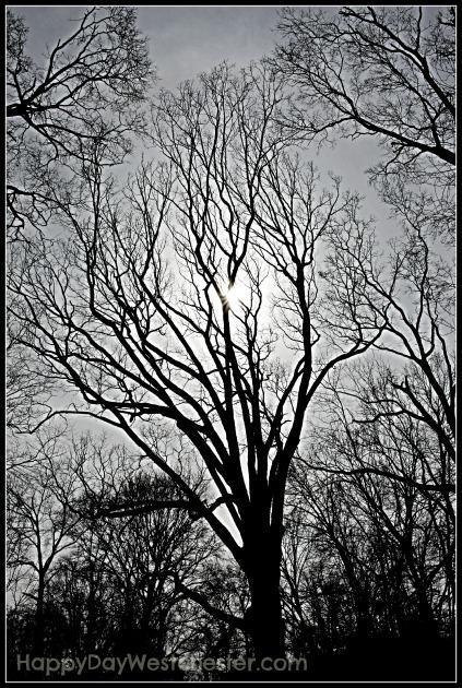 Happy Day Westchester WW T Tree